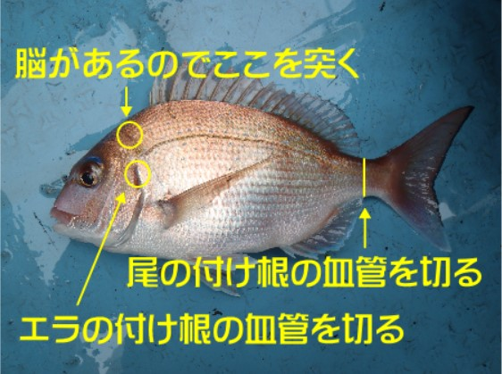 方 魚 締め