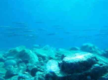 カマス釣りの時期と時間帯