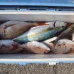 魚の締め方の種類(血抜き・神経締めなど)