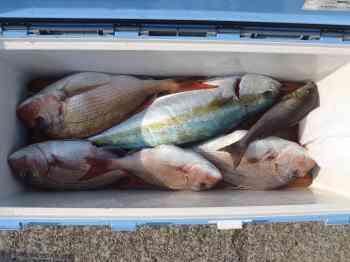 魚の締め方