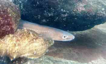 アナゴ釣りの時期と時間帯