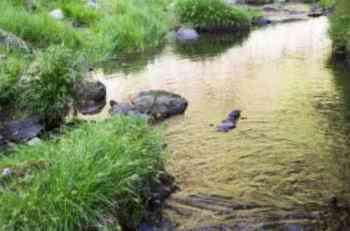 ウナギ釣りのポイント・場所