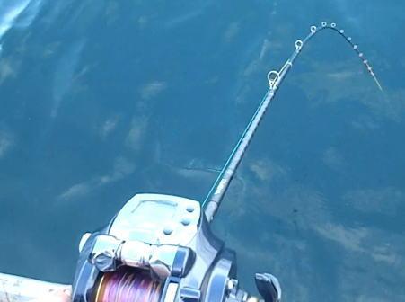 大阪湾のタチウオ釣りの釣果