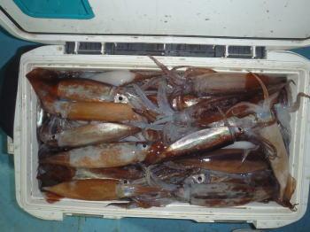 ムギイカ釣りの仕掛けと釣り方