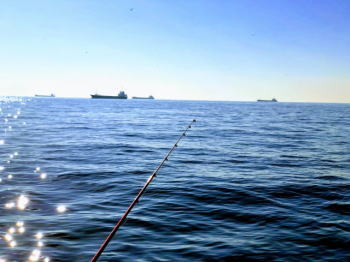 【マゴチ】東京湾の仕掛けと釣り方!エビの付け方は?