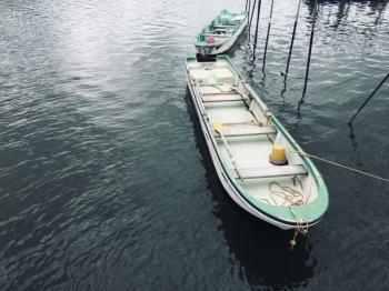 ボートハゼ釣りの仕掛けと釣り方