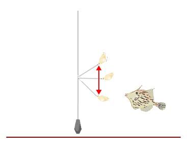 カワハギの釣り方のコツ!「タタキ」の方法は?
