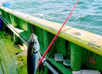 ビシアジの仕掛けと釣り方のコツ