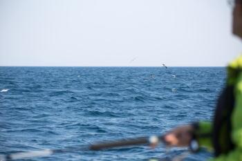 トラフグ釣りの仕掛けと釣り方【東京湾】