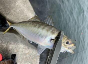 デイアジングの釣り方のコツは?ポイントやワームなどタックルについて解説!