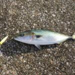 沖堤防釣りのタックル!青物&根魚の釣り方などは?
