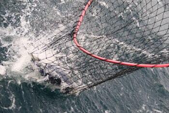 カツオのフカセ釣り仕掛けと釣り方【スピニング釣法】